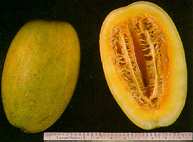 One of Many Melon Types